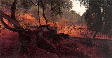 The vine of Pausanias in Pangrati